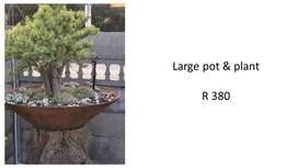 Pots and plants for sale