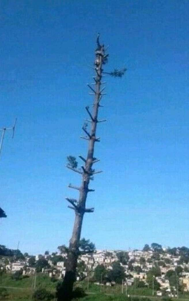Marshall tree felling services and stump removal