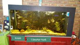 Fishtank and accesories