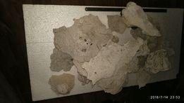 Огромные куски плоского коралла для цихлидника
