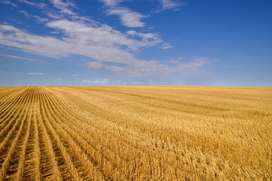 Looking for farming land to rent in or just outside Gauteng Gauteng
