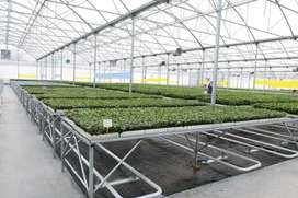 Hydroponic tunnels, Irrigation system, greenhouse tunnel