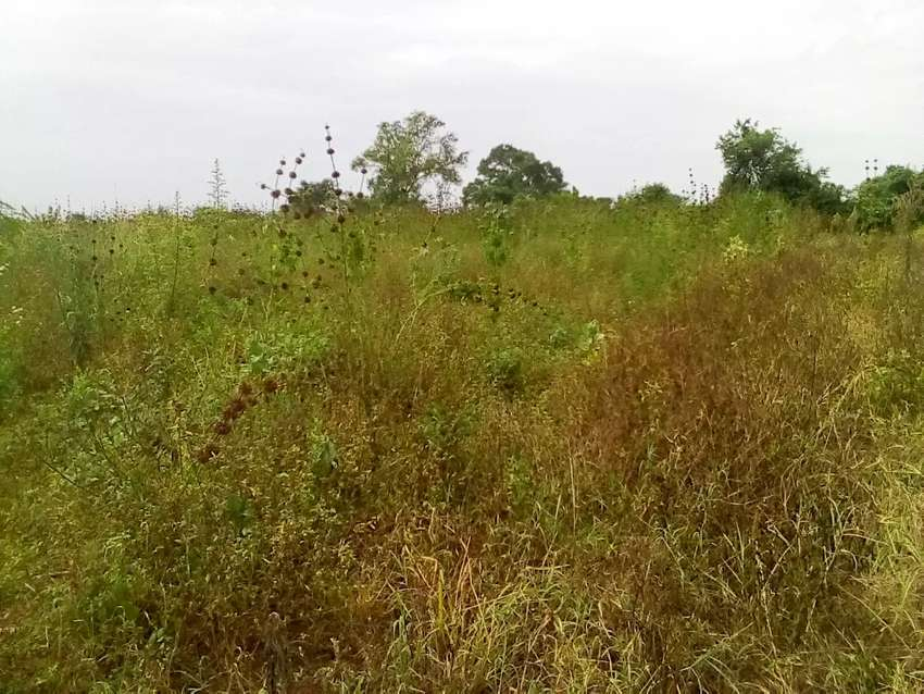 Land for sale in Busoga kamuli @ 4.5m per Acer 0