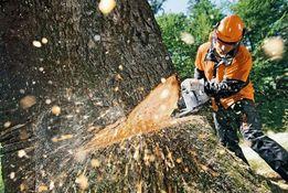 обрезка, распил и вывоз проблемных и ненужных деревьев