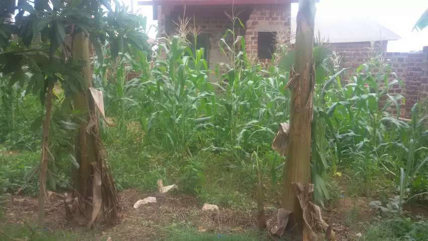 Plot on sale located at nakabugo bulenga plot size 40 / 30 0