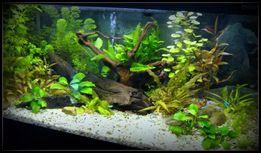 обслуживание, оформление аквариумов